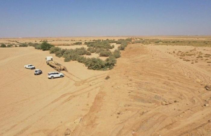«إمارة القصيم»: الانتهاء من تأهيل وإزالة 60105 م2 تعديات من مجرى وادي الرمة برياض الخبراء