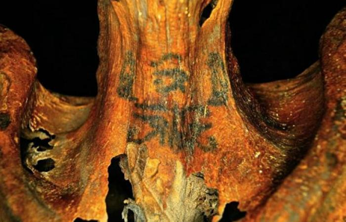 """""""شرنقة"""" مصرية غريبة حيرت العلماء.. المجلات العلمية تحاول كشف اللغز.. صور"""