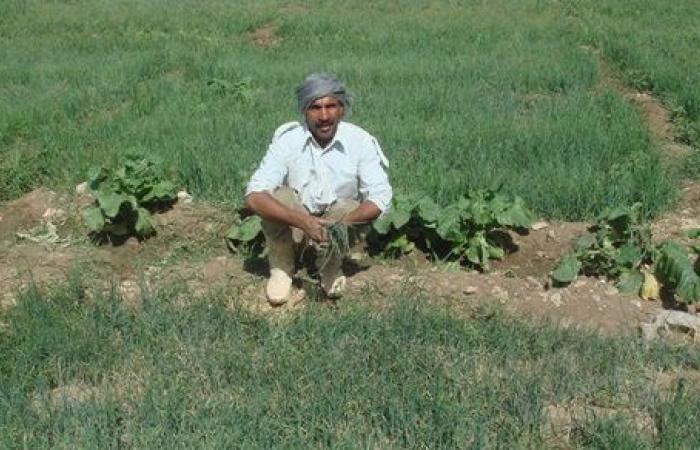 بينها قمح وخضراوات .. تعرف على منتجات مزارع جامعة سوهاج