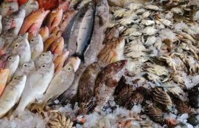 أسعار الأسماك بسوق العبور اليوم .. البلطى الأسوانى من 17 إلى 37 جنيها للكيلو