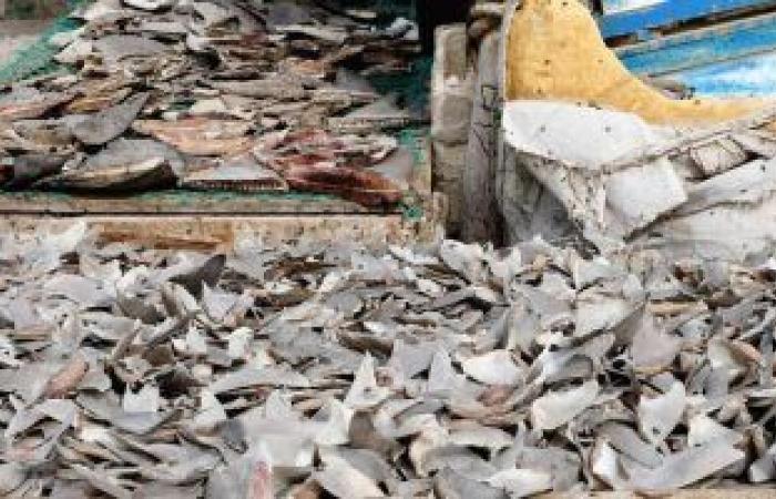 أسعار الأسماك بسوق العبور اليوم.. البلطى الأسوانى يتراوح بين 17-37 جنيها للكيلو