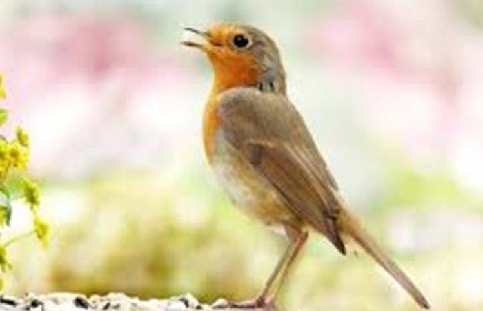 """أبرزها """"زيادة القدرة على السمع"""".. تعرف على فوائد وأهمية الريش للطيور"""