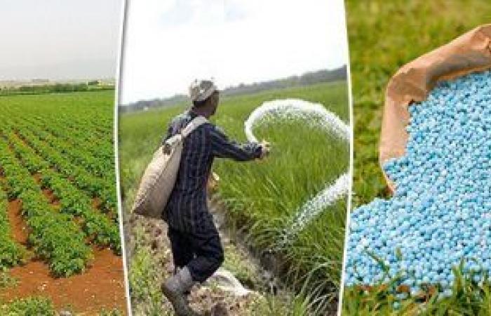 الزراعة: مراجعة حصص الأسمدة الموردة من الشركات واستمرار الصرف للمحصول الشتوى