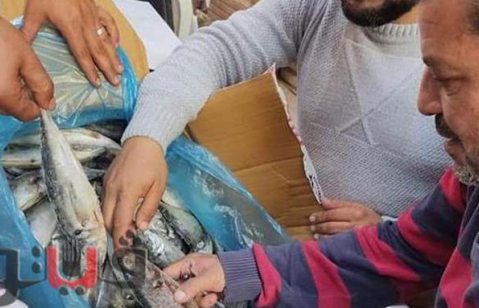 ضبط أسماك فاسدة داخل ثلاجة في الإسماعيلية   صور