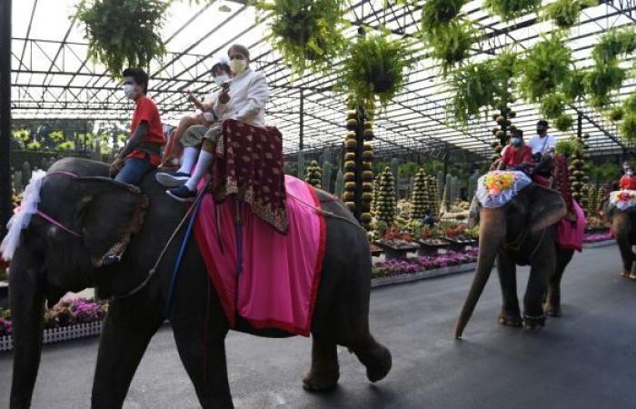 بمناسبة عيد الحب... زفاف جماعي على ظهور الأفيال في تايلاند... صور