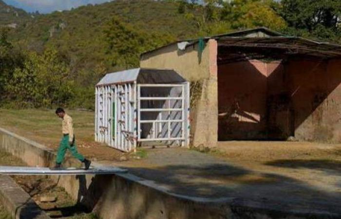 الأكثر وحدة .. فيل ينقذ حديقة حيوانات في إسلام آباد