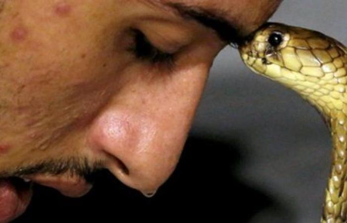 حكم تربية الثعابين في المنزل .. دار الإفتاء تكشف الحكم.. فيديو
