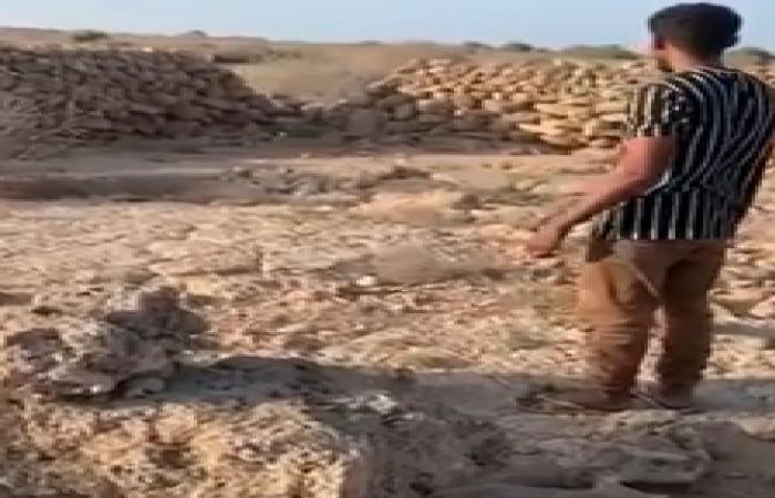 بالفيديو.. مواطن يطلق ظبي فرساني صغيرًا.. و«الحياة الفطرية»: شكرًا