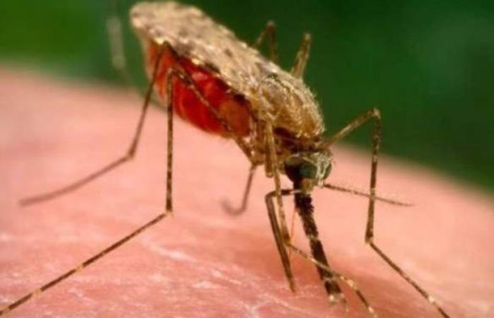 أعراض مرض الملاريا وعلاجه