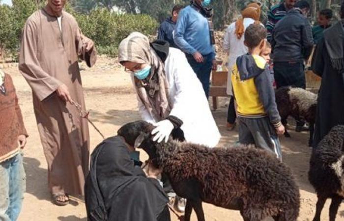 قافلة جامعة سوهاج البيطرية تعالج ٨٢١ من الماشية بقرية الأحايوه