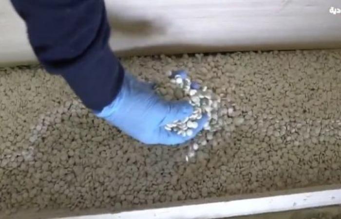 فيديو .. إحباط تهريب أكثر من مليوني حبة كبتاجون في جمرك الحديثة
