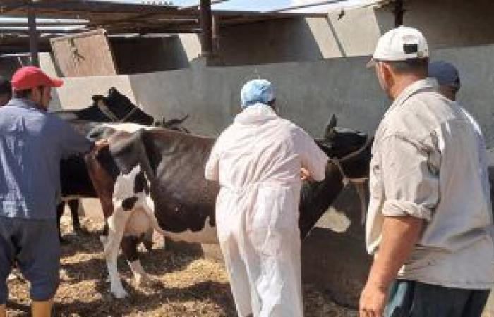 تمديد حملة تحصين الماشية ضد الحمى القلاعية والوادى المتصدع 15 يوما
