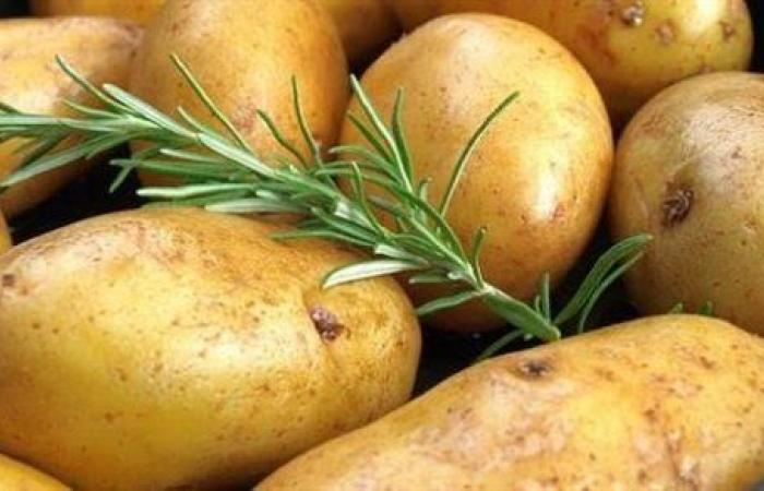بشرى.. رفع الحظر عن تصدير البطاطس المصرية إلى السوق الروسية