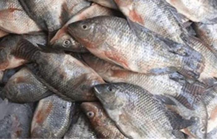 حجم واردات مصر من الأسماك في 2020