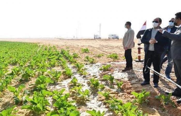 """تفاصيل تفقد السيسي حصاد مشروع """"مستقبل مصر"""".. الرئيس يؤكد اهتمامه بنجاح المستثمرين"""