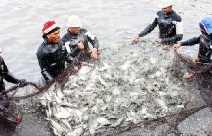 أسعار السمك بسوق العبور للجملة اليوم.. البلطى المزارع يتراوح بين 17-22 جنيها