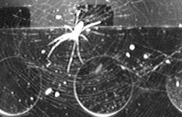علماء يترجمون شبكة العنكبوت إلى موسيقى لأول مرة.. اعرف التفاصيل