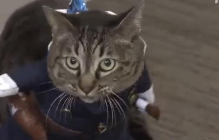 قطة مديرًا لأحد أقسام الشرطة في اليابان