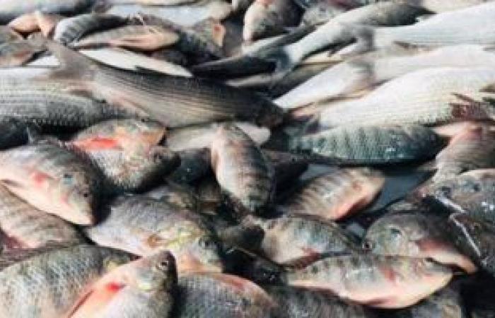 أسعار الأسماك اليوم بسوق العبور للجملة.. البلطي الأسواني 17-37 جنيهاً للكيلو