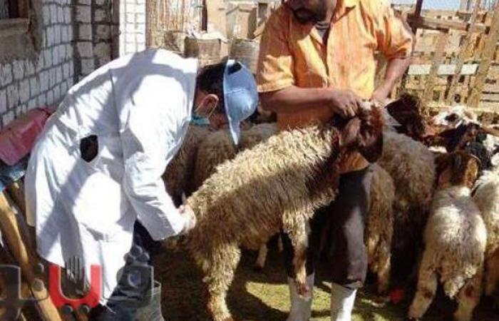 تحصين 84 ألف رأس ماشية ومحاضر تموينية بالشرقية