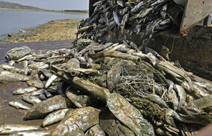 مسؤول لبناني: 7 أطنان من الأسماك النافقة تم بيعها للمواطنين