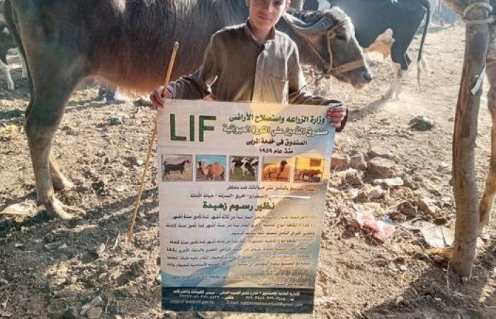 الزراعة: حملة توعية بضرورة التأمين على الثروة الحيوانية في أكبر أسواق الماشية بالمنوفية