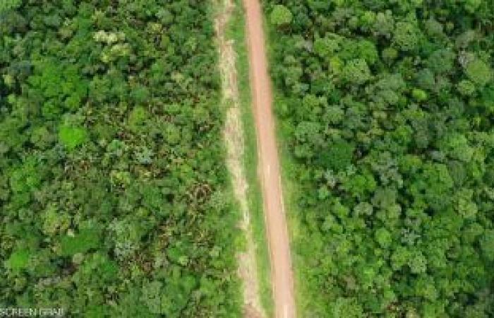 غابات الأمازون غير قادرة على مساعدة الكوكب في امتصاص انبعاثات الكربون