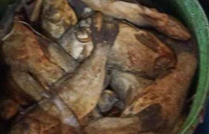 الصحة: إعدام 6 أطنان أغذية وأسماك مملحة ومدخنة فاسدة