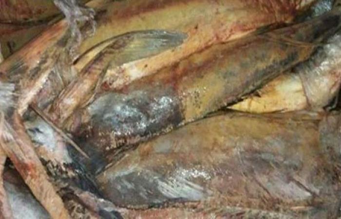 ضبط 1.5 طن رنجة فاسدة داخل ثلاجة في الإسكندرية