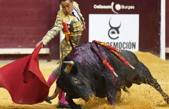 استئناف مصارعة الثيران في إسبانيا لأسباب سياسية