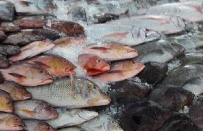 أسعار الأسماك اليوم بسوق العبور.. البورى يتراوح بين 32-48 جنيها للكيلو