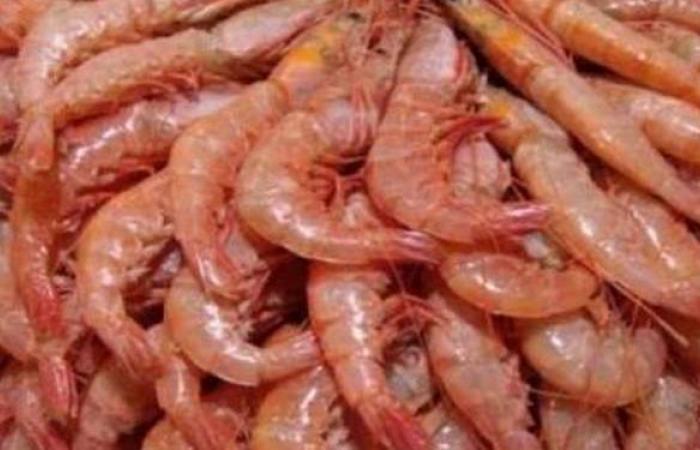 ضبط 2.5 طن لحوم وجمبري داخل مصنع لتجهيز الوجبات الجاهزة بالقاهرة