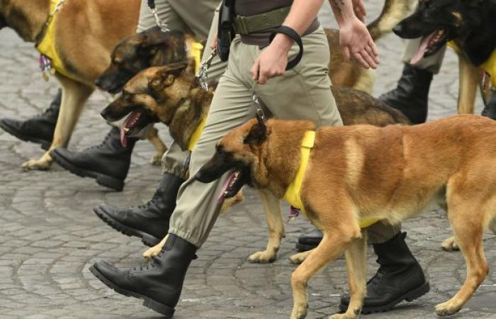 """الجيش الأمريكي يرد على تقارير بشأن ترك جنوده """"كلابا في كابول"""""""