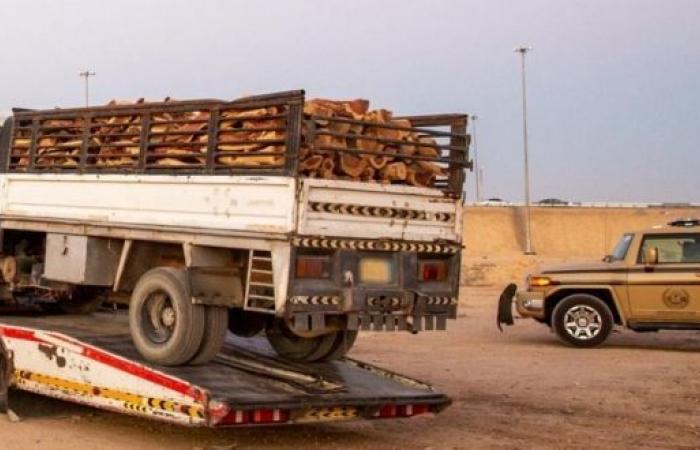 ضبط 10 مخالفين بحوزتهم كميات من الحطب المحلي المعروض للبيع