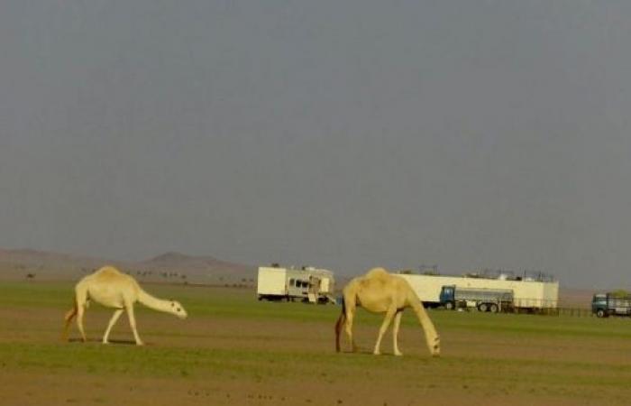 صحاري وادي الدواسر ترتدي ثوبها الأخضر
