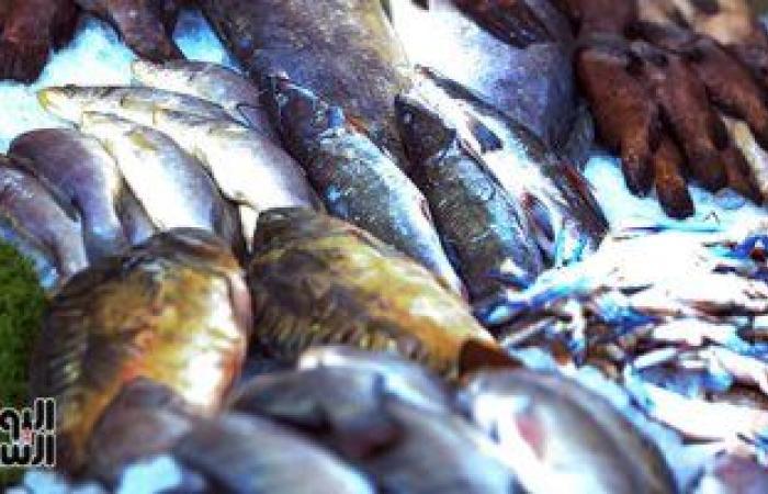 أسعار السمك فى سوق العبور للجملة اليوم.. البلطي الأسواني يتراوح بين 17-37 جنيها