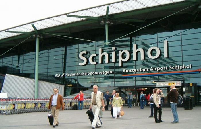 هولندا: مطار شيفول يختبر الخنازير «كفزاعات» لإبعاد الطيور عن الممرات