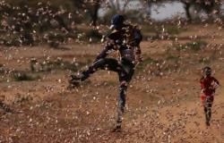 لحظة هجوم أسراب الجراد على مساحات زراعية في الأردن.. فيديو